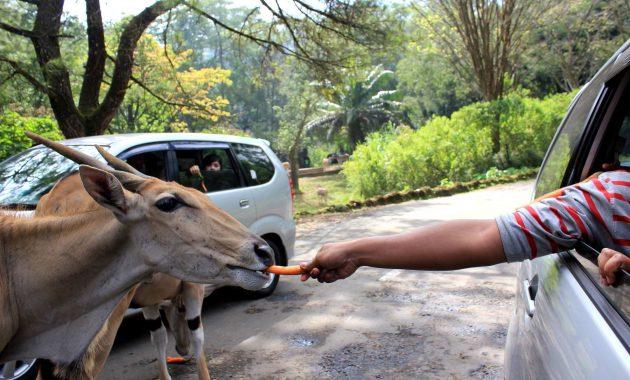 Harga Tiket Taman Safari Bogor