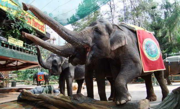 objek wisata taman safari indonesia
