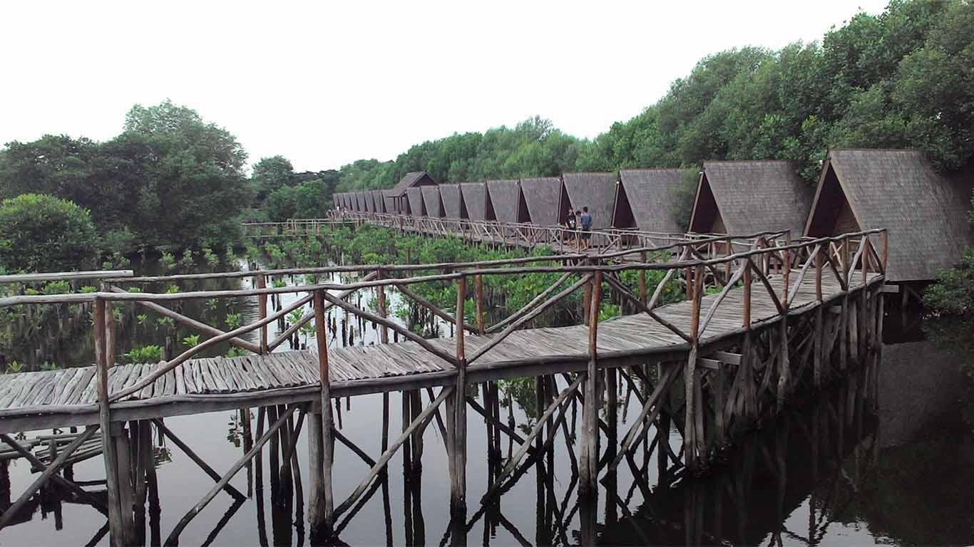 Harga Tiket Masuk Ekowisata Mangrove PIK