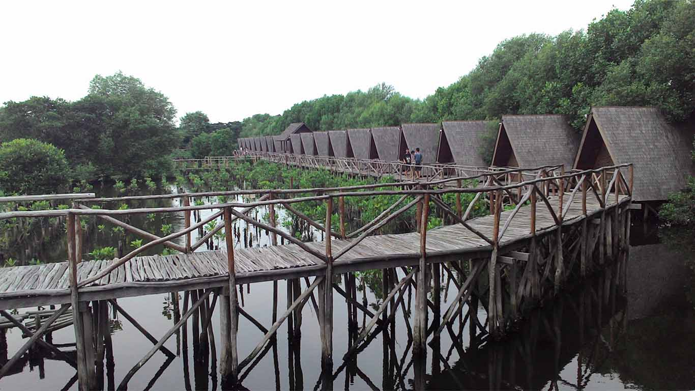 Ekowisata Mangrove