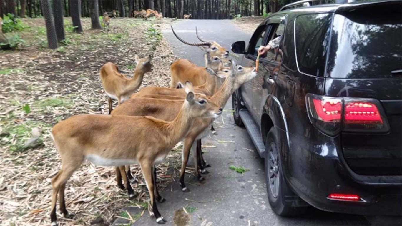 Wahana Fasilitas Harga Tiket Masuk Taman Safari
