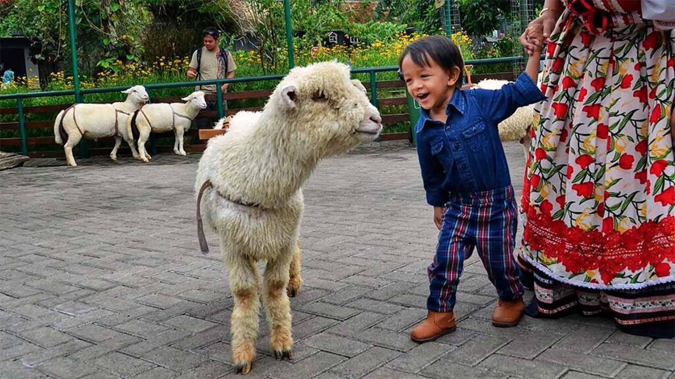 Wisata Harga Tiket Masuk Farmhouse Lembang 2018