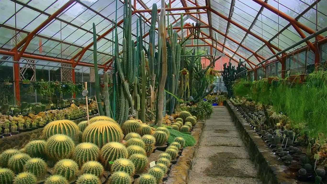 √ Harga Tiket Masuk Kebun Raya Cibodas, Pesona Wisata, Fasilitas