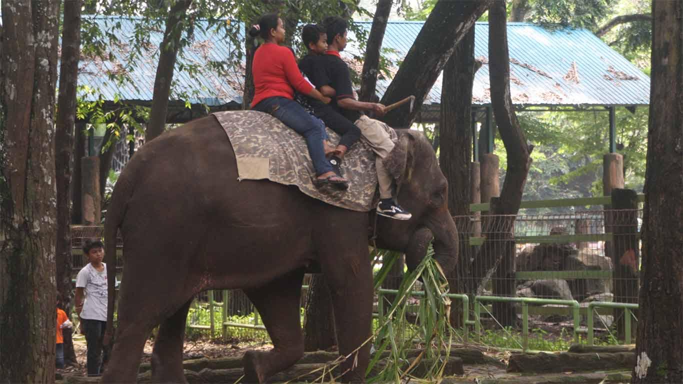 fasilitas kebun binatang ragunan