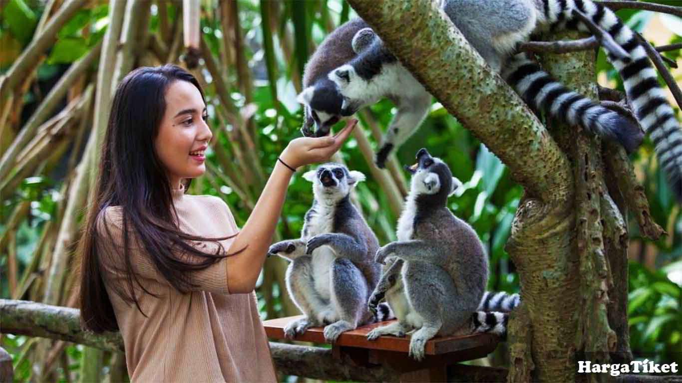 harga tiket bali zoo terbaru
