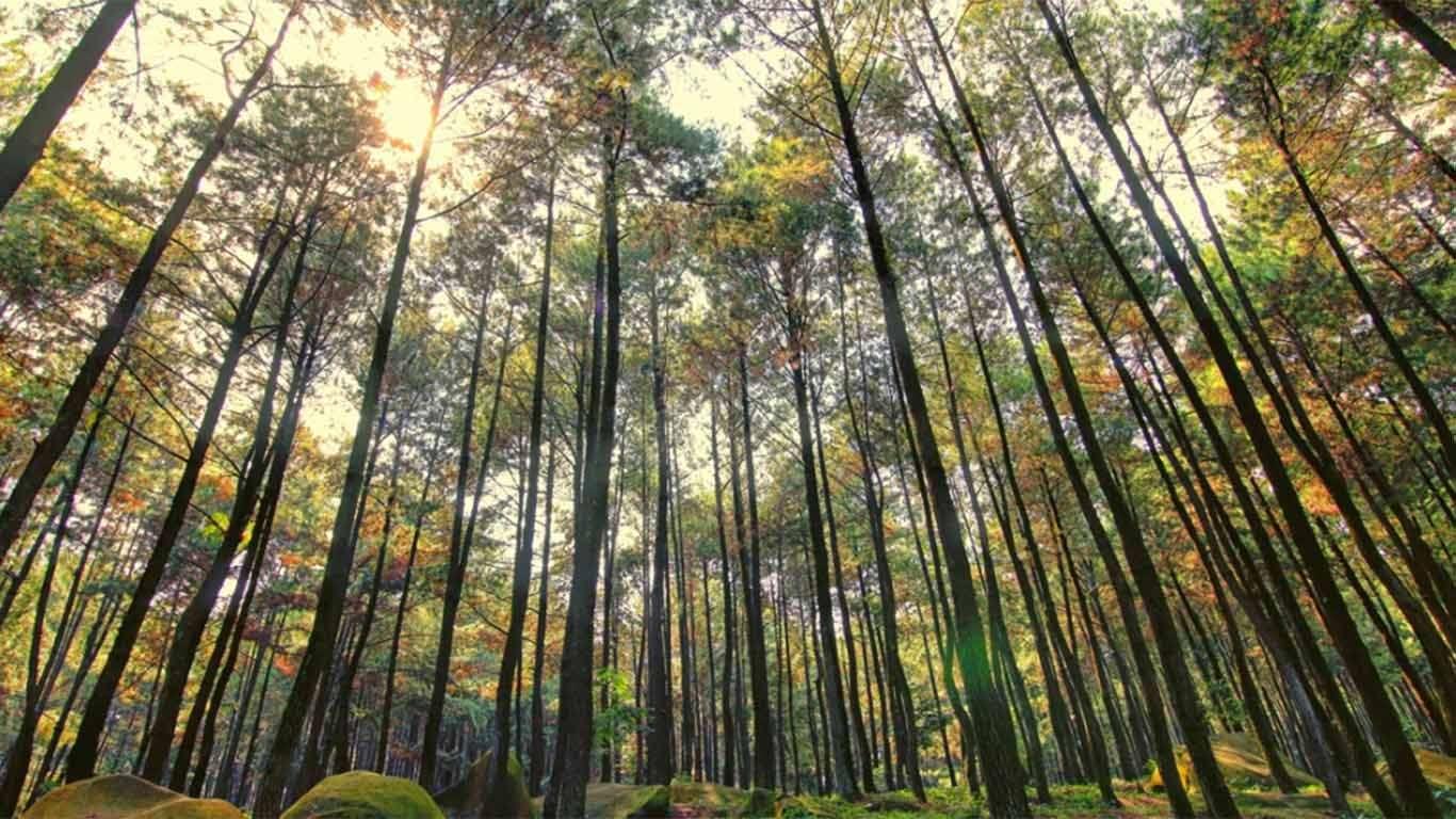 Harga Tiket Gunung Pancar Bogor