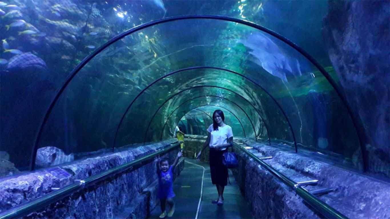 harga tiket masuk aquarium jakarta
