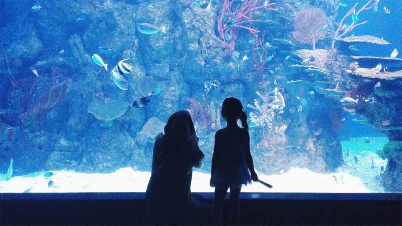 harga tiket masuk jakarta aquarium 2019