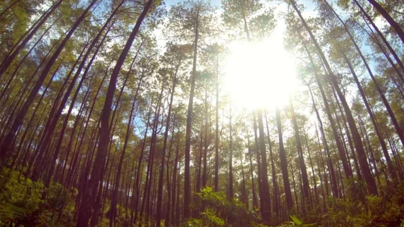 Harga Tiket Taman Jayagiri Lembang