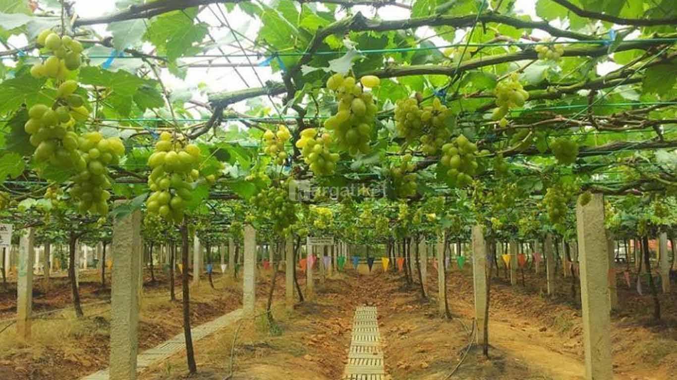 Agrowisata Sumberbendo