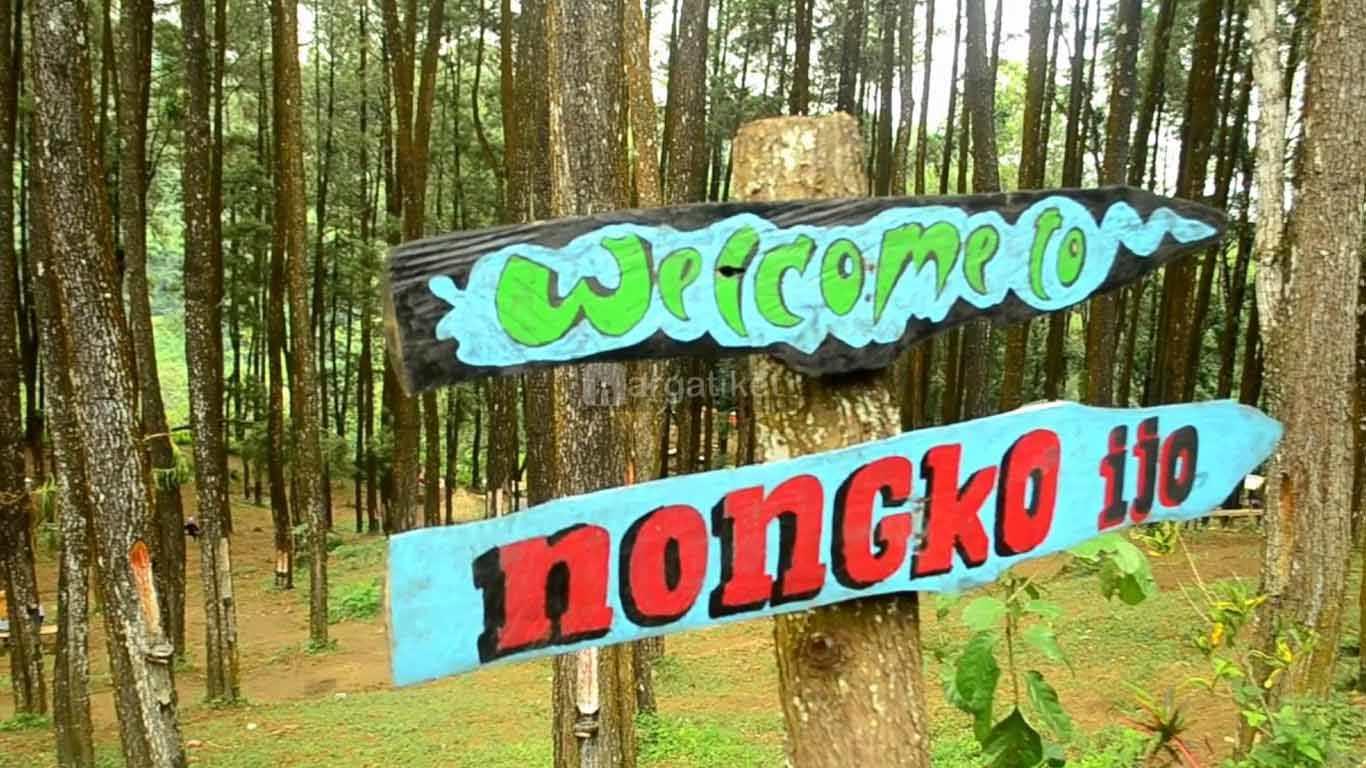Hutan Pinus Nongko Ijo Kare