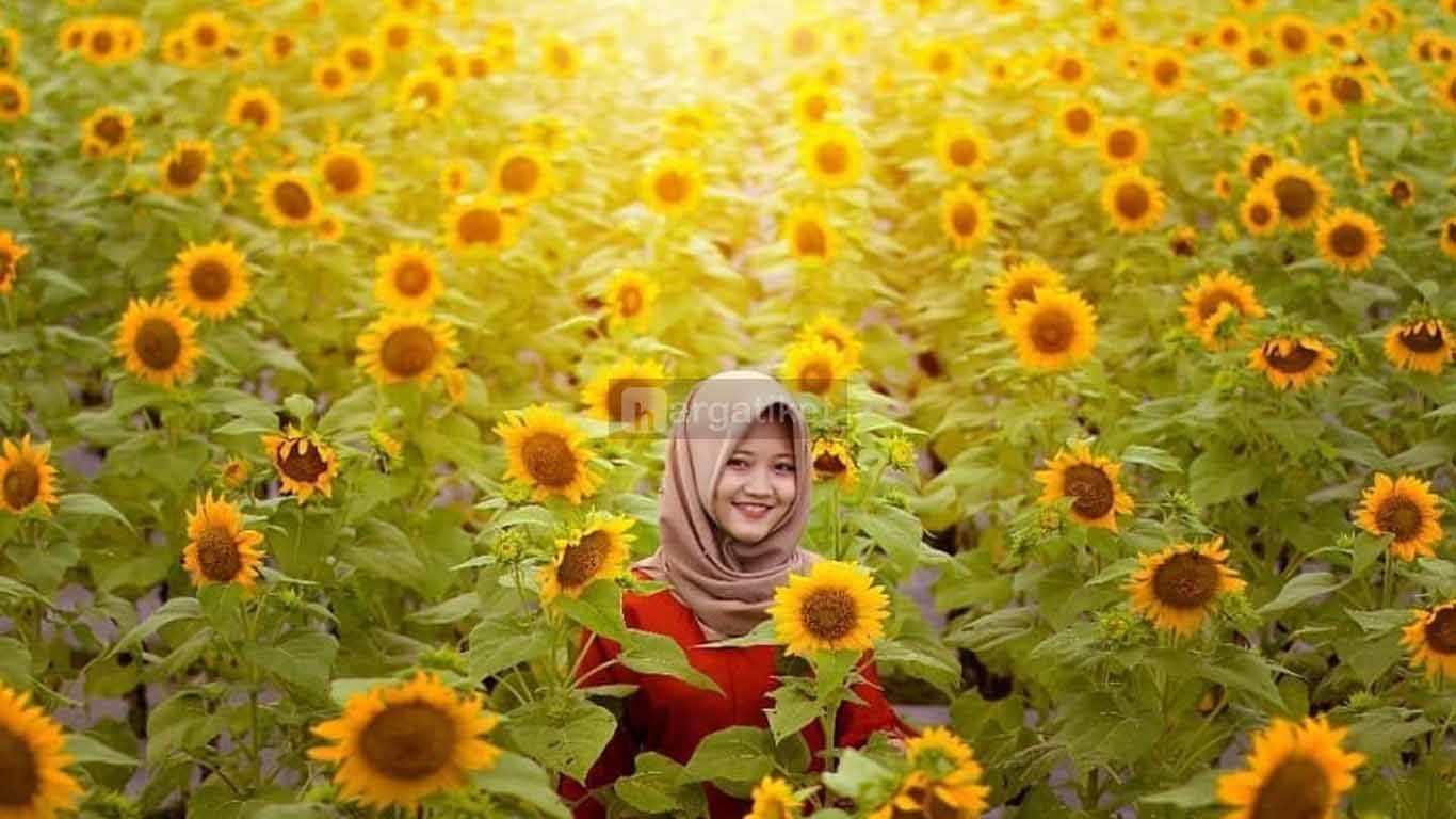 Taman Bunga Matahari atau Taman Dewari