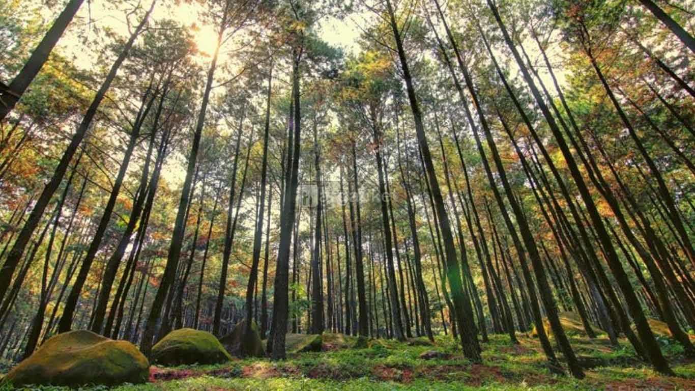 Taman Hutan Rakyat (Tahura)