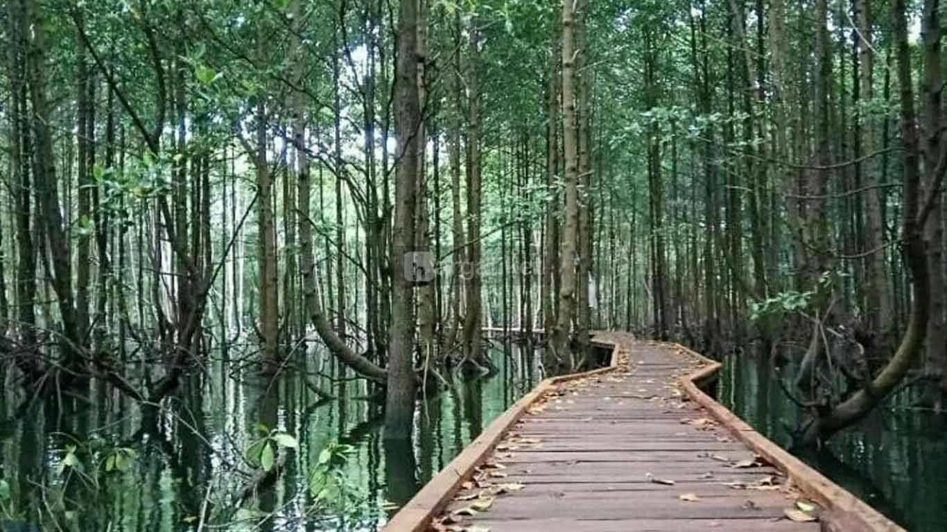 Taman Nasional Kutai (TNK)