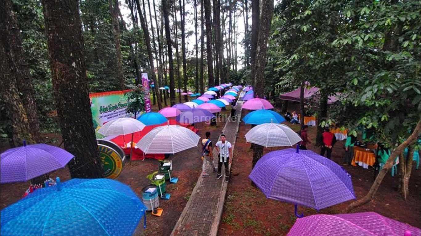 hutan pinus banjarbaru