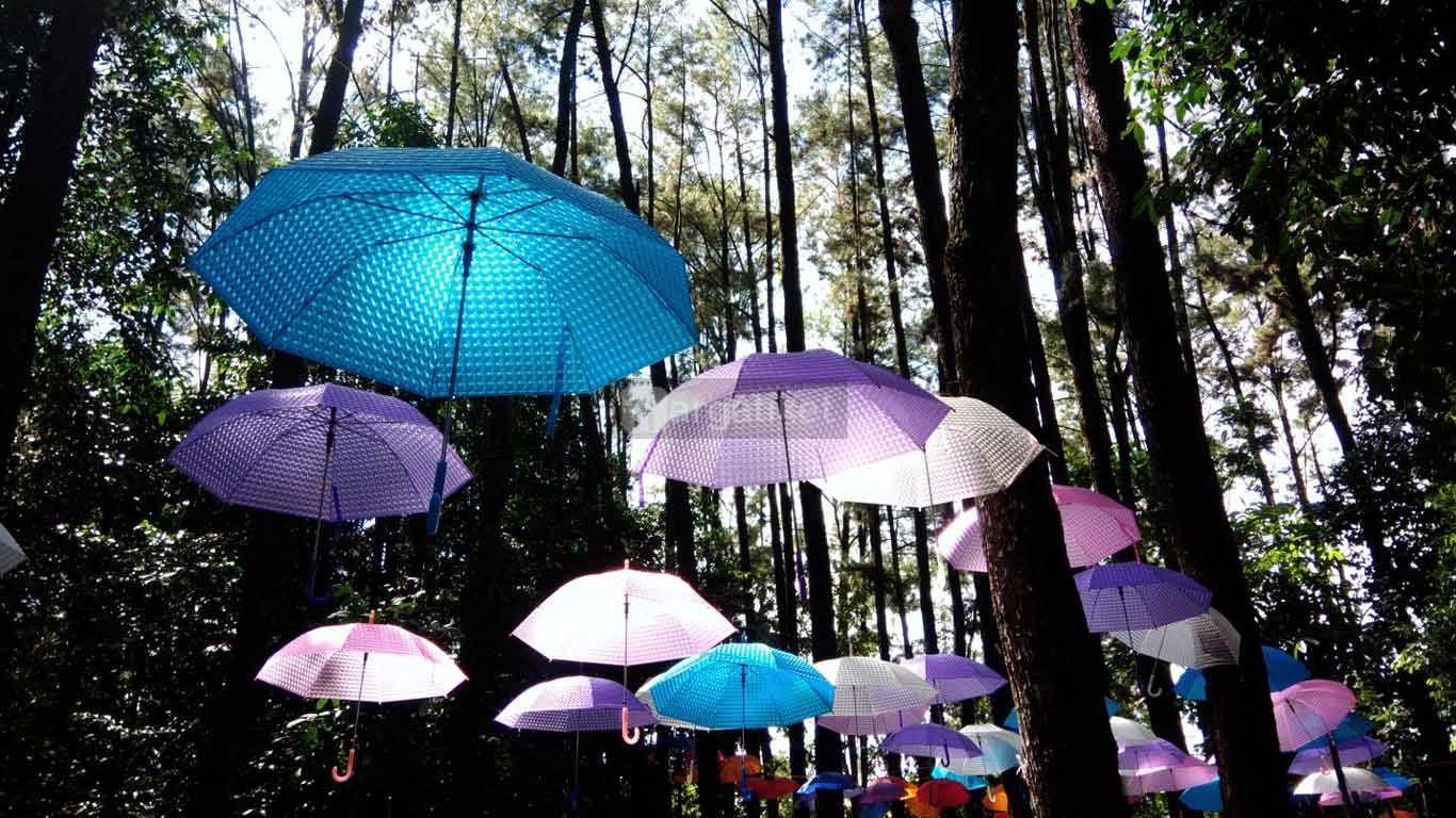Hutan Pinus Mentaos