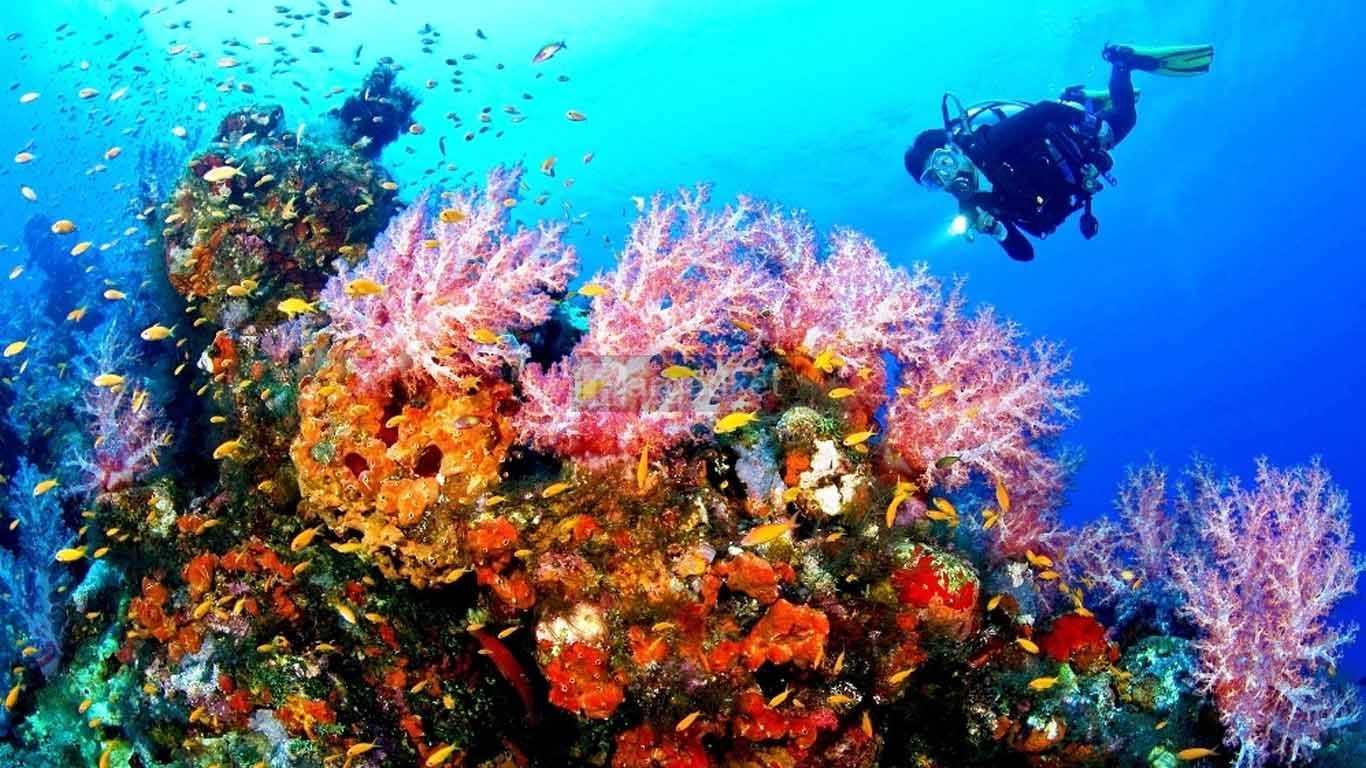 Taman Wisata Laut Olele