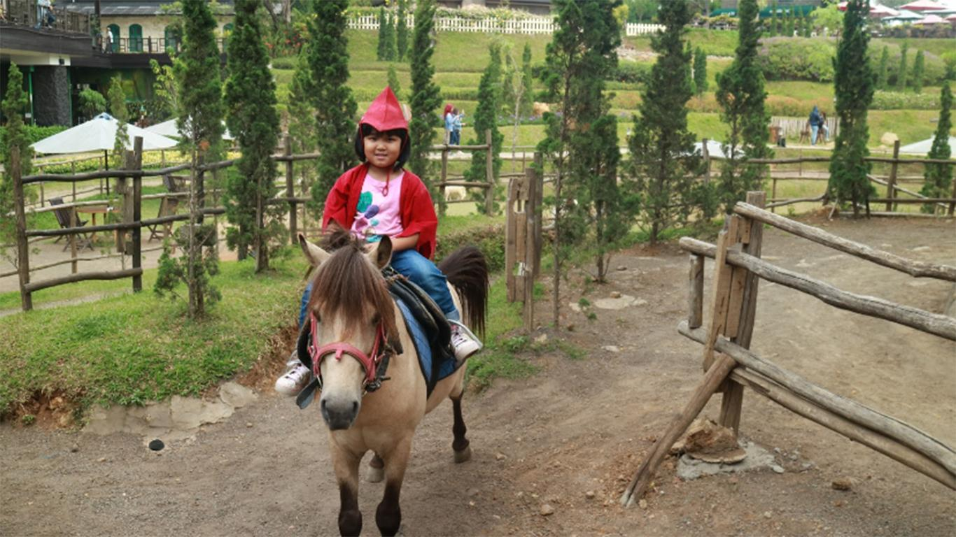Berkuda di Taman Kelinci Ciwidey