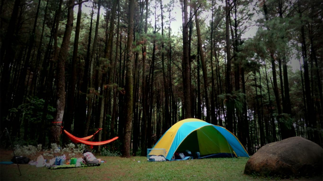 Hutan Pinus GIL