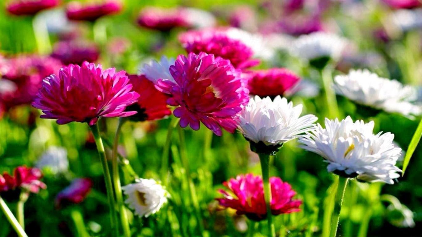 Koleksi Bunga