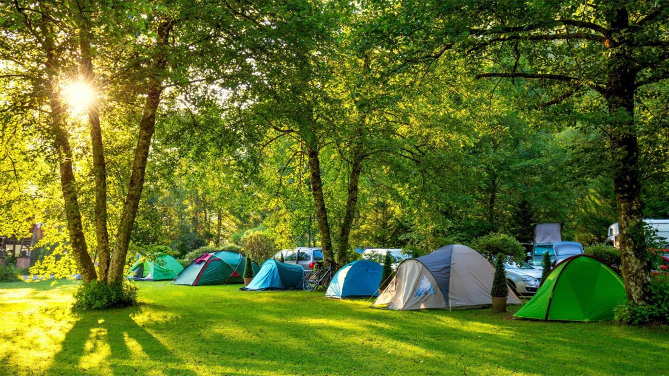 √ Pine Forest Camp: Objek Wisata, Fasilitas, Lokasi, Rute, Harga