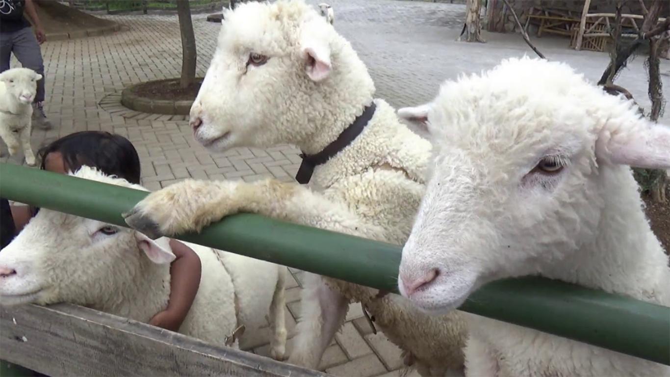 happy farm ciwidey tiket