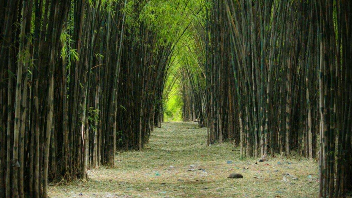 Harga Tiket Hutan Bambu Surabaya