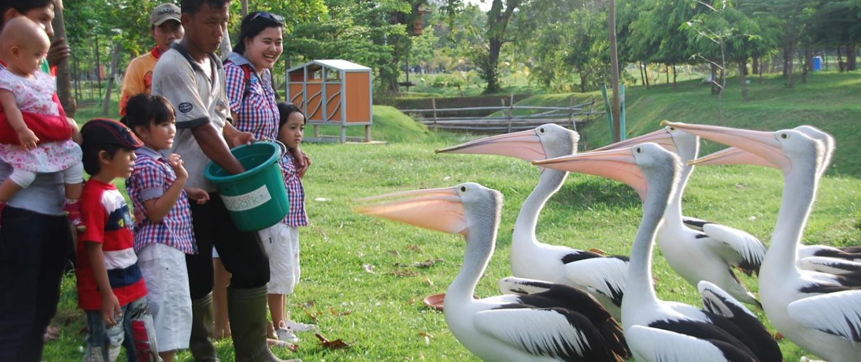 Harga Tiket Ecopark Ancol