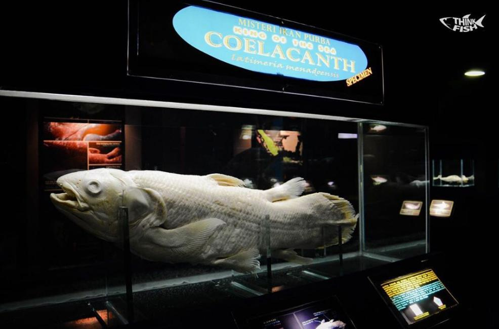 Museum Seaworld Ancol