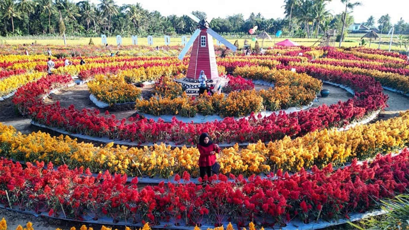 taman bunga celosia gedong songo