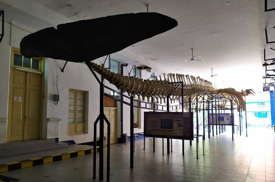 Harga Tiket Museum Zoologi Bogor