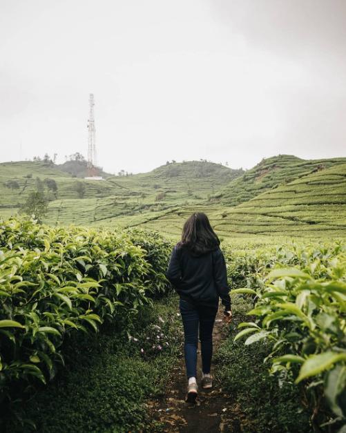 kebun teh wonosari lawang malang