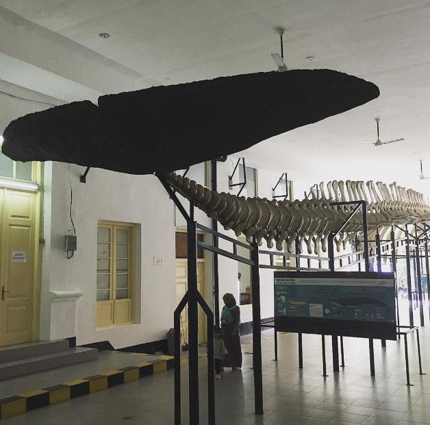 Museum Zoologi Bogor: Review & Harga Tiket (2021