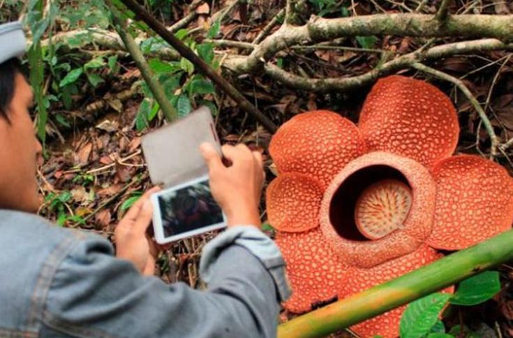 Taman Bunga Rafflesia Arnoldi