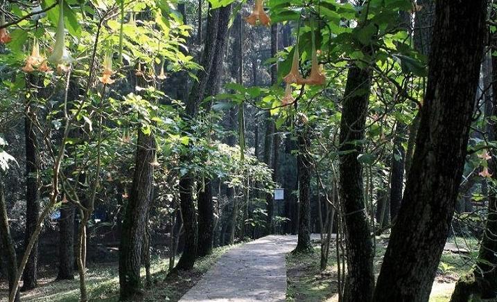 Taman Hutan Raya Sultan Syarif Kasim