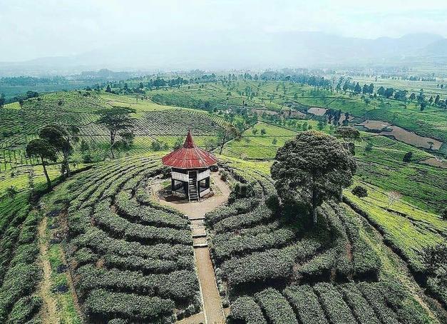 kebun teh pangalengan
